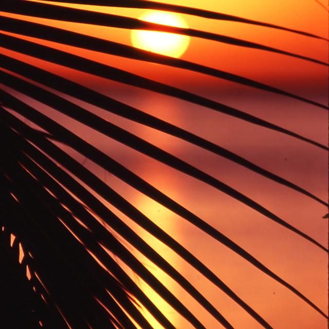"""Tropical Yucatan Sunset"" stock image"