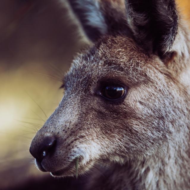 """Kangaroo Way 0324"" stock image"