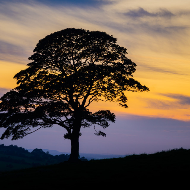 """""""Tree silhouette with sunset"""" stock image"""