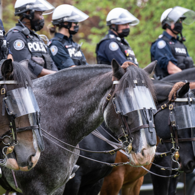 """""""Mounted Police Officers in Toronto, Ontario"""" stock image"""