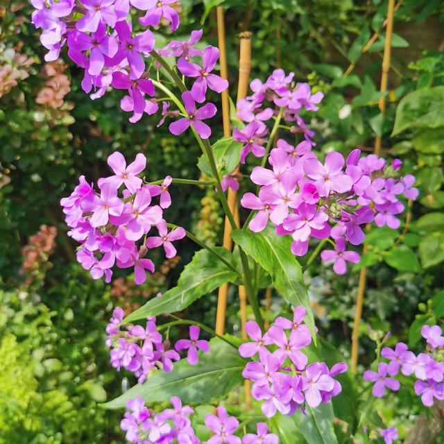 """Wild flowers in an urban garden"" stock image"