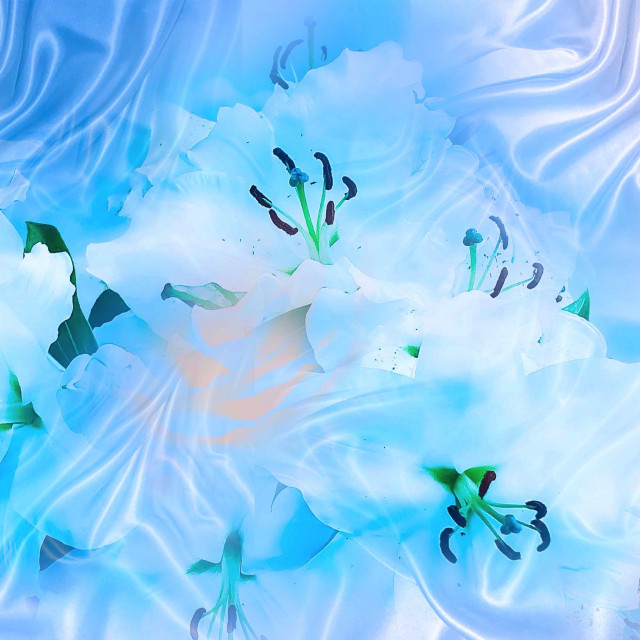 """""""White Lilies on a silk background"""" stock image"""