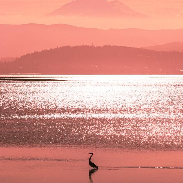 """Fuchsia sunrise"" stock image"