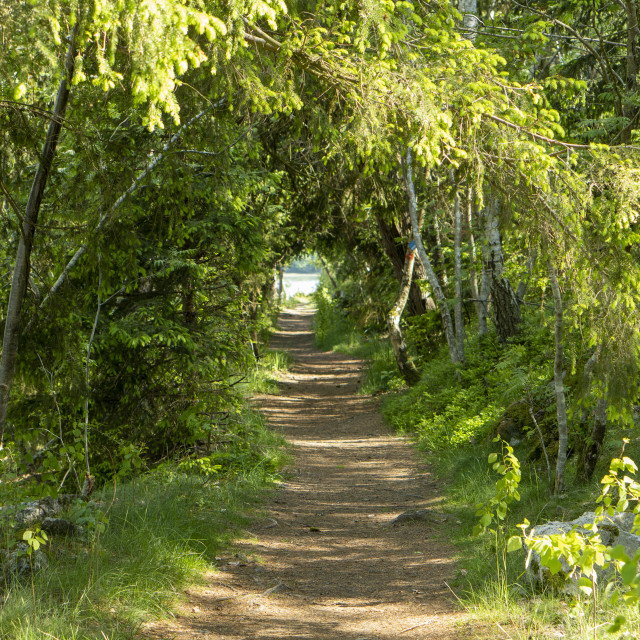 """""""Sunlit path in the woods"""" stock image"""
