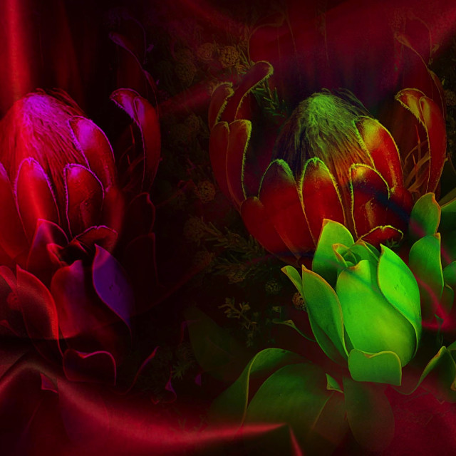 """""""Flowers on a red silk background"""" stock image"""