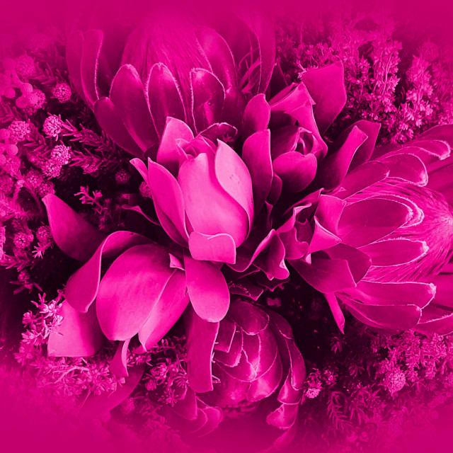 """""""Flowers on a shocking pink background"""" stock image"""