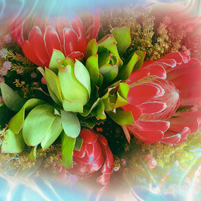 """""""Flowers on a silk back ground"""" stock image"""