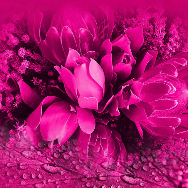 """""""Pink flowers on a pink background"""" stock image"""