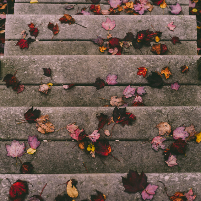 """""""Fall Leaves"""" stock image"""