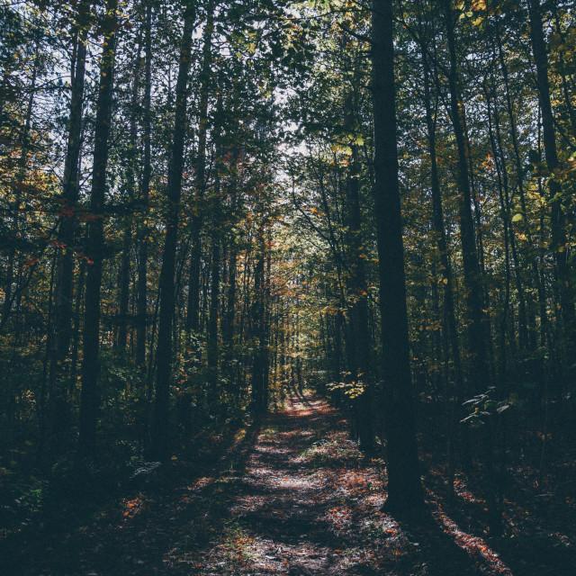 """Woods"" stock image"