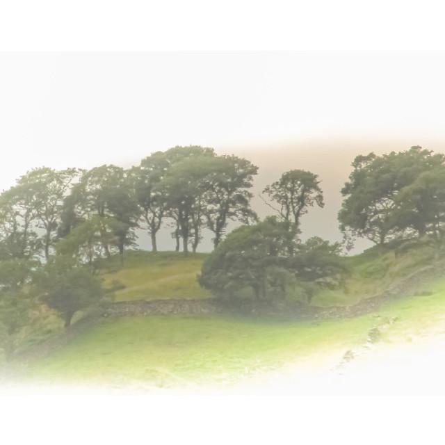 """""""Tree line."""" stock image"""