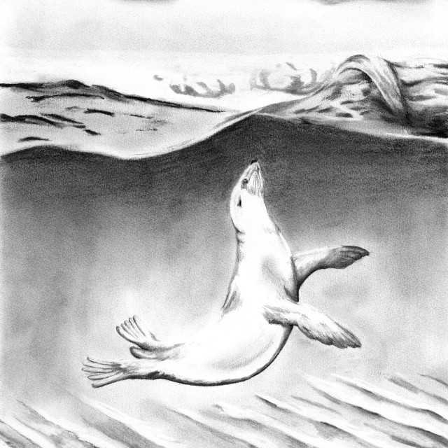 """""""Sea lion swimming in the shallows, illustration"""" stock image"""