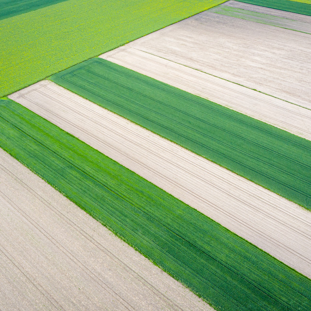 """""""Aerial view of agricultural area, plowed fields and young green crop"""" stock image"""