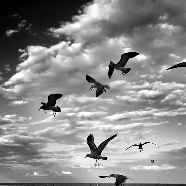 """""""Seagull silhouettes."""" stock image"""