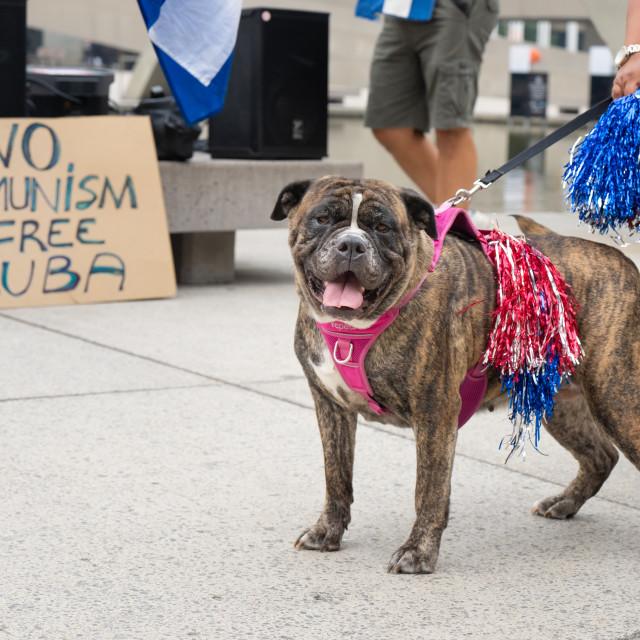 """Dog Calls For A Free Cuba in Toronto, Ontario, Canada"" stock image"