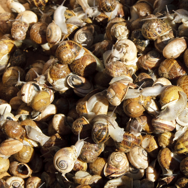 """""""Snails in a box"""" stock image"""