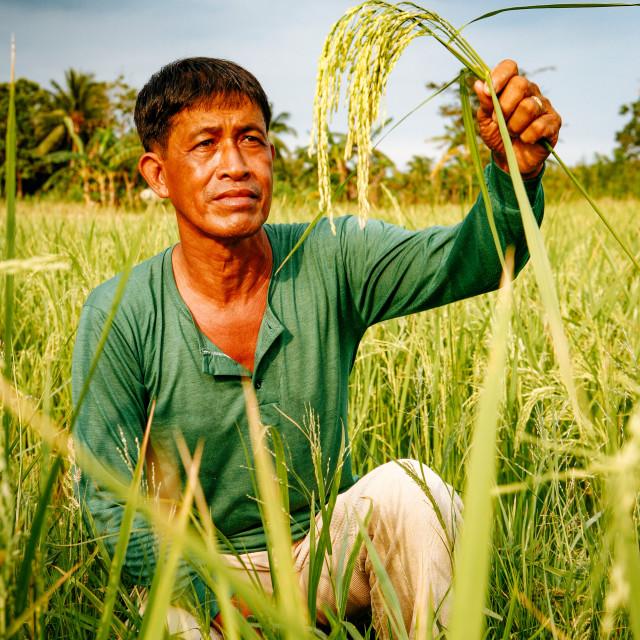 """MASIPAG Farmerorganisation"" stock image"