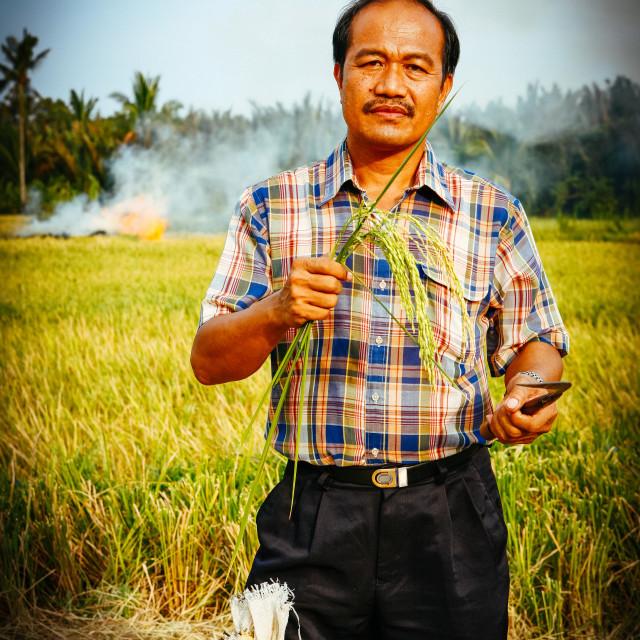 """""""Golden Rice - Goldener Reis"""" stock image"""