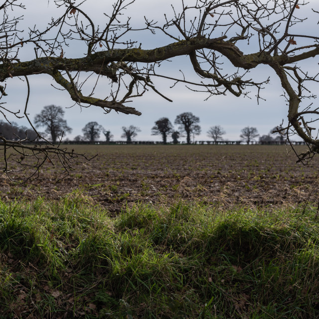 """""""Bare tree branch above grass verge, ploughed field and distant t"""" stock image"""
