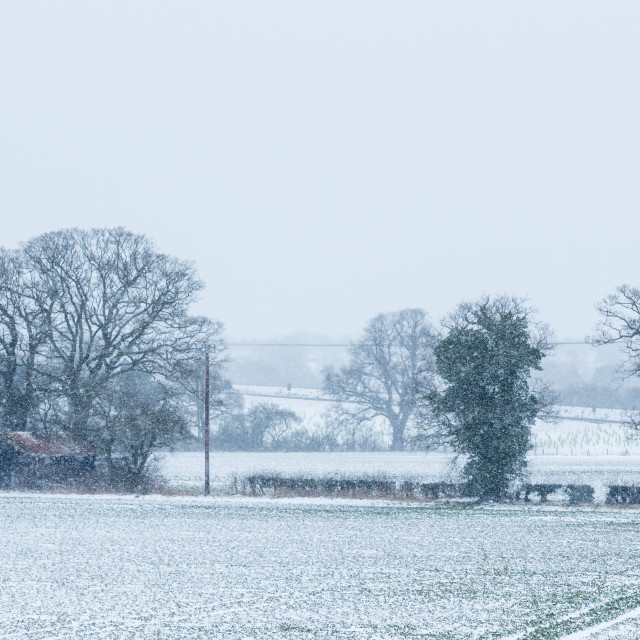 """""""Snow falling over field with trees and derelict barn"""" stock image"""