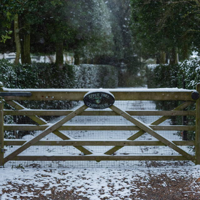 """""""Snow covered garden gate and robin on ground"""" stock image"""