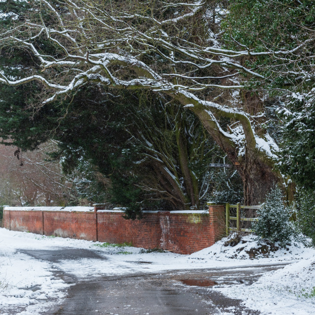 """""""Red brick garden wall and trees in snow on Low road, Great Plums"""" stock image"""