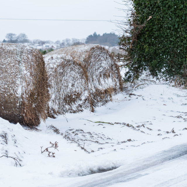 """""""Round hay bales and snow blocking field entrance, Norfolk i"""" stock image"""