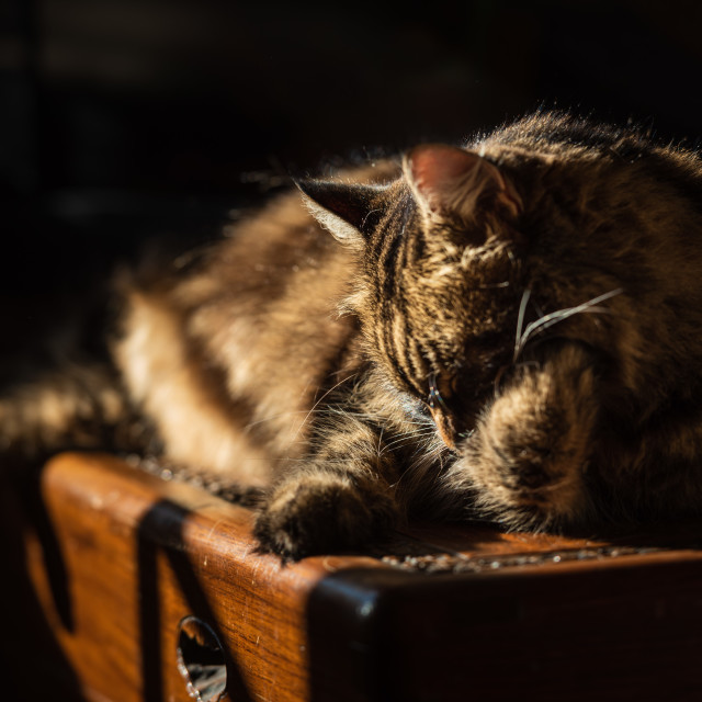 """""""Tabby cat lying on wooden chest in sunlight i - cleaning"""" stock image"""