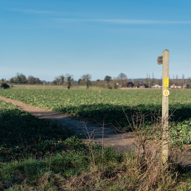 """""""Path across field with footpath sign, blue sky"""" stock image"""