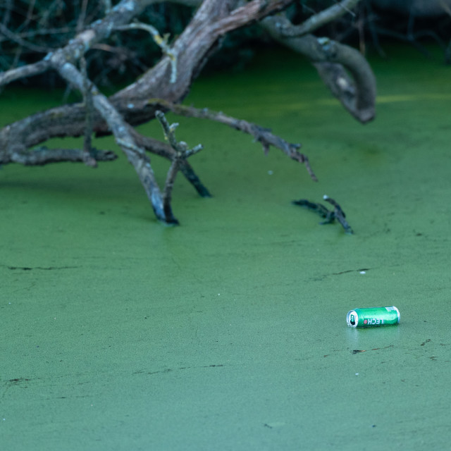 """""""Dead branches in green stagnant water with discarded beer can"""" stock image"""