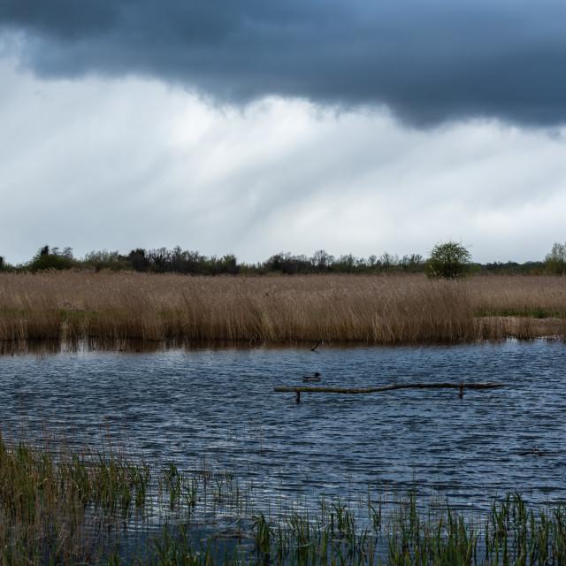 """Rainclouds over fenland i"" stock image"