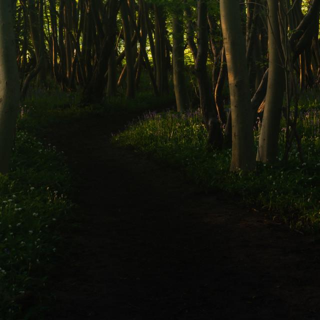 """Footpath through wild garlic woodland"" stock image"