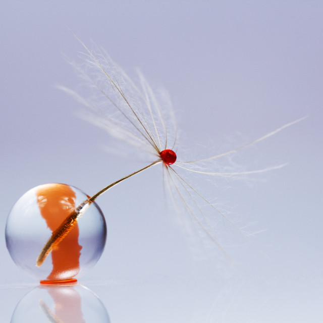 """""""Dandelion seed with jelly ball and red ink"""" stock image"""
