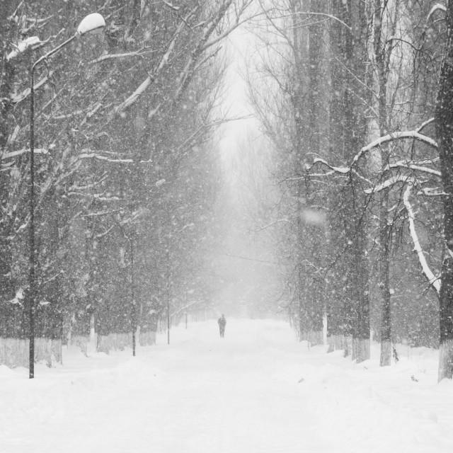 """Snowing winter landscape"" stock image"