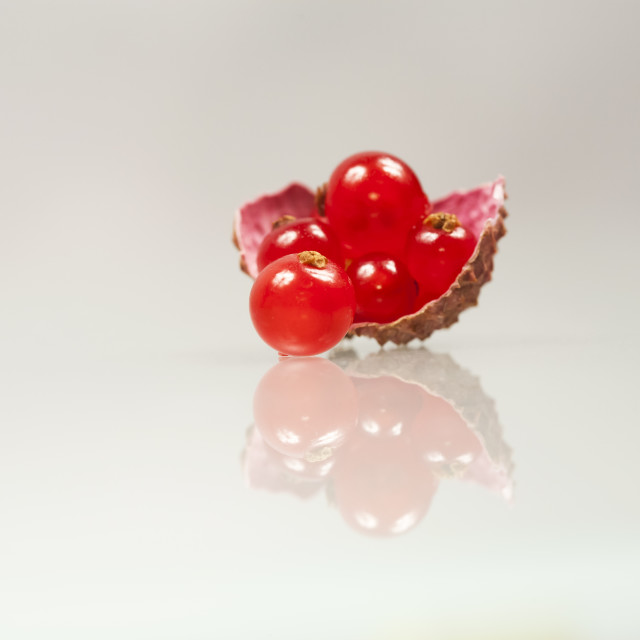 """""""Red currants in a litchi shell"""" stock image"""