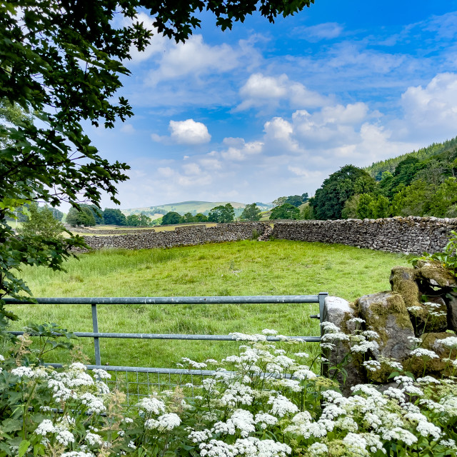 """""""Meadowland Alongside the River Wharfe at Barden, Yorkshire Dales. England."""" stock image"""