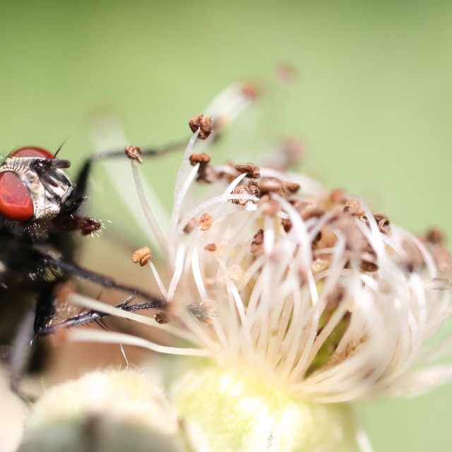 """""""The Fly"""" stock image"""
