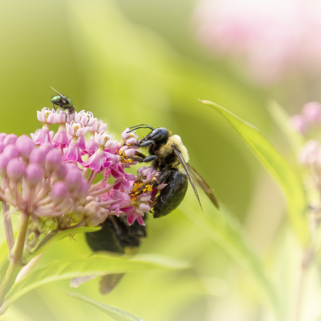 """""""Bee and Fly on a Flower"""" stock image"""