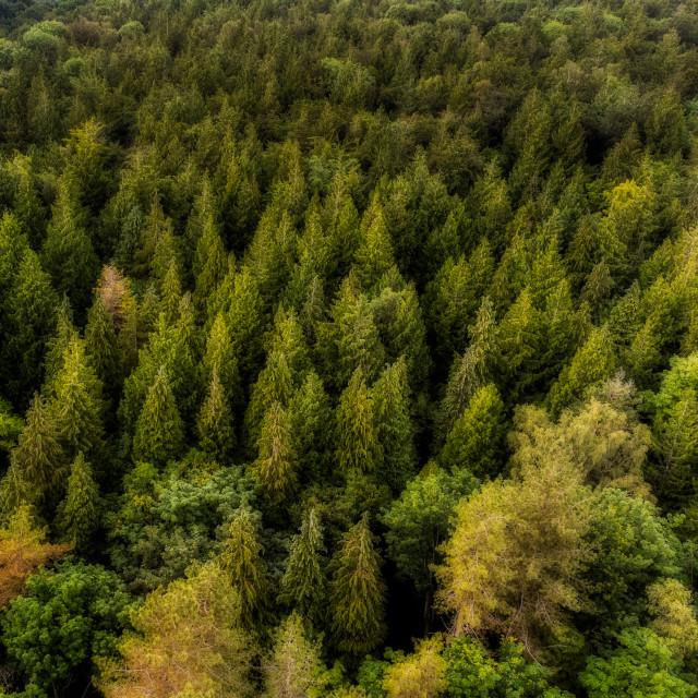 """""""Forest Treetops, Hampshire, UK"""" stock image"""