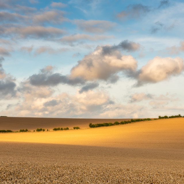 """""""Field Ready for Harvest, Hampshire, UK"""" stock image"""