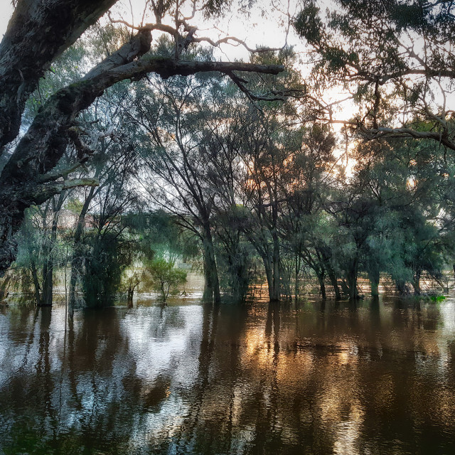 """""""Flooded River"""" stock image"""