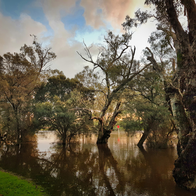 """""""Flooded River 2"""" stock image"""