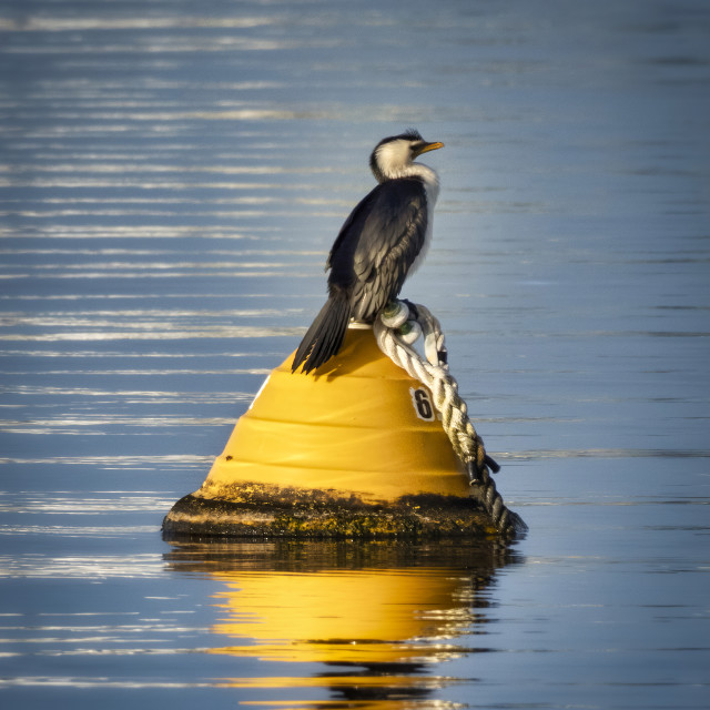 """""""Cormorant Perched on a Buoy"""" stock image"""
