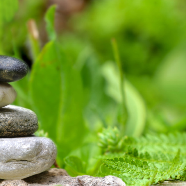 """""""essential oil bottle next to a pile of pebbles among green foliage in garden"""" stock image"""