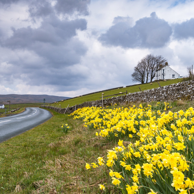 """""""Spring in Upper Teesdale"""" stock image"""