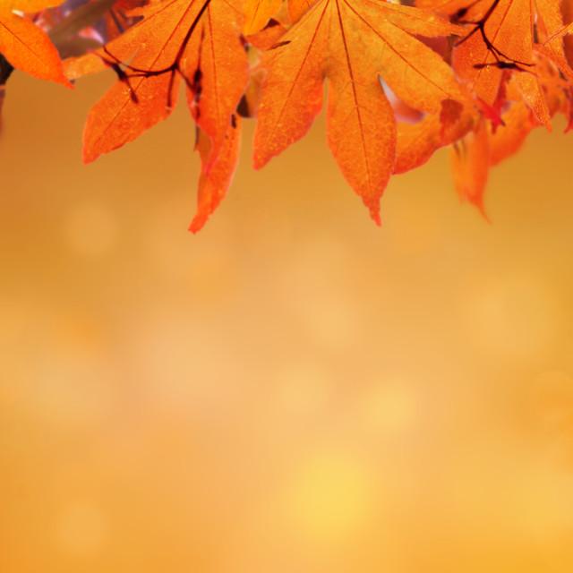 """""""orange autumnal background with leaf of maple tree"""" stock image"""