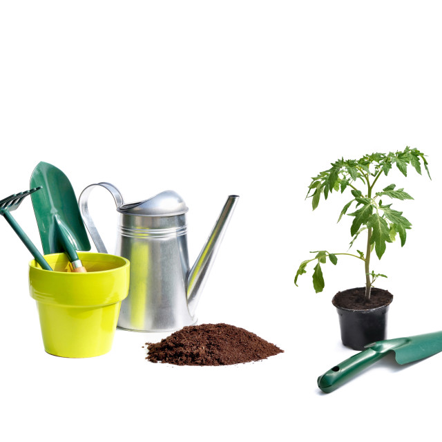 """""""collage of gardening equipment and plants isolated on white back"""" stock image"""