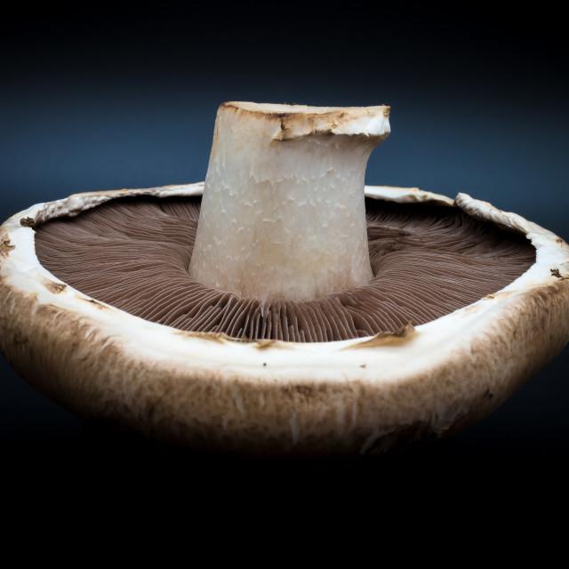 """""""Mushroom Captured"""" stock image"""