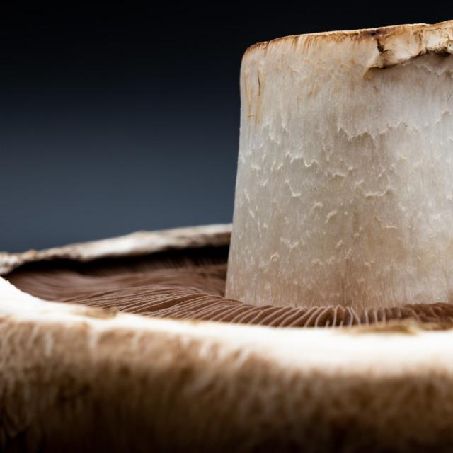 """Mushroom Up Close"" stock image"