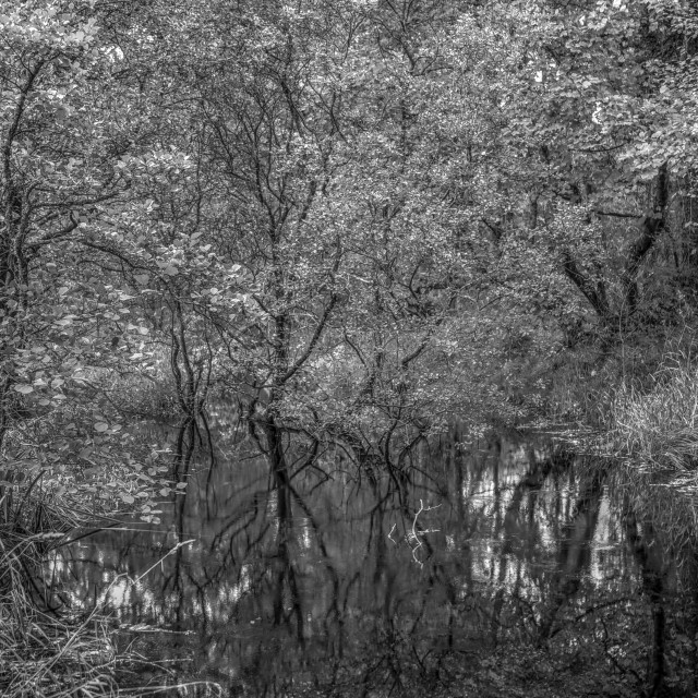 """""""Reflections Of The Marsh"""" stock image"""